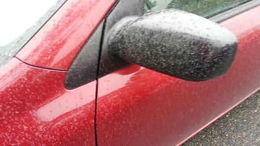 """WSU Scientists Answer the """"Ash Rain"""" Mystery from February"""