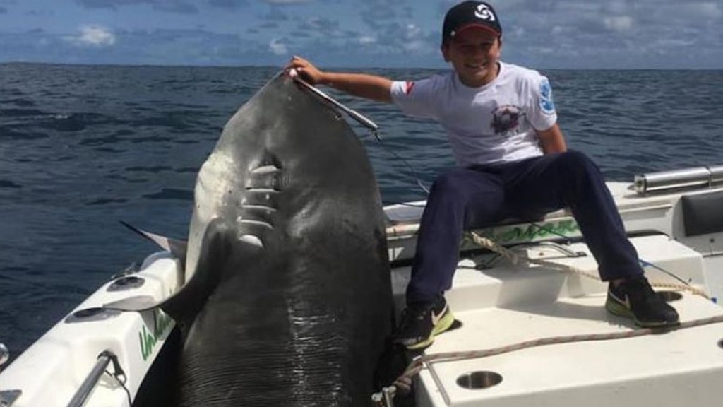 8-year-old reels in 692-pound shark