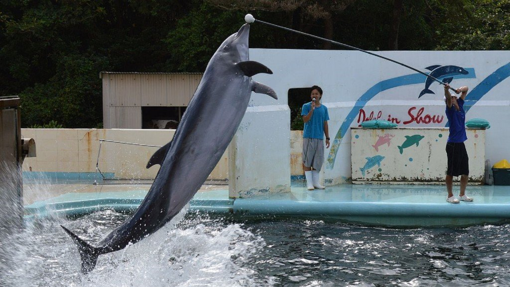 Dolphin stuck in closed Japanese aquarium prompts outrage