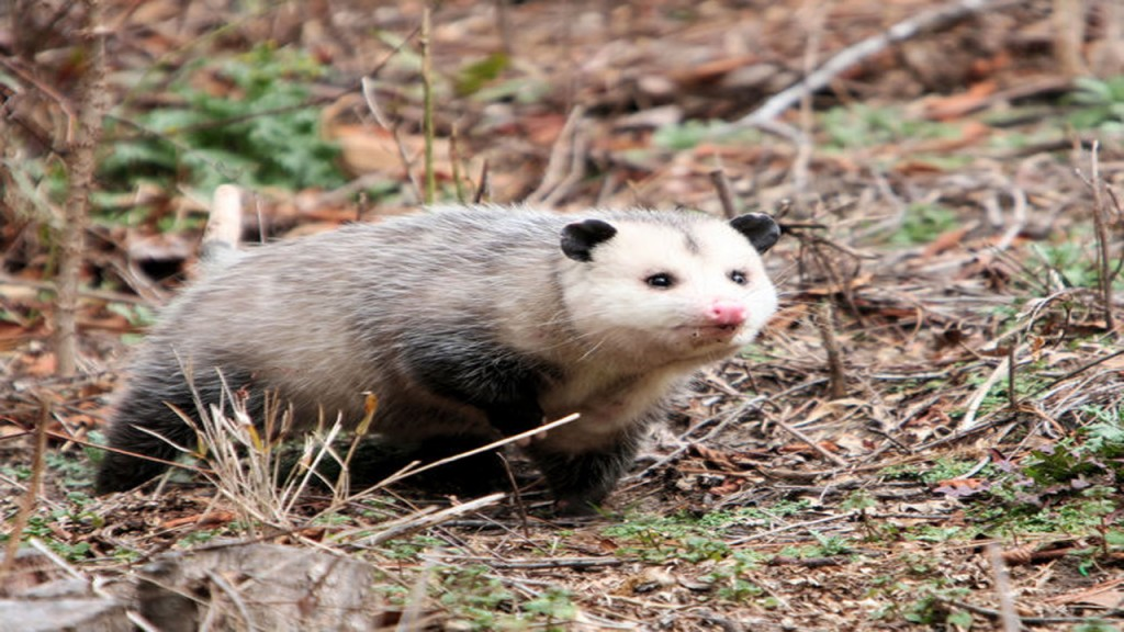Man trying to scare opossums lights house on fire