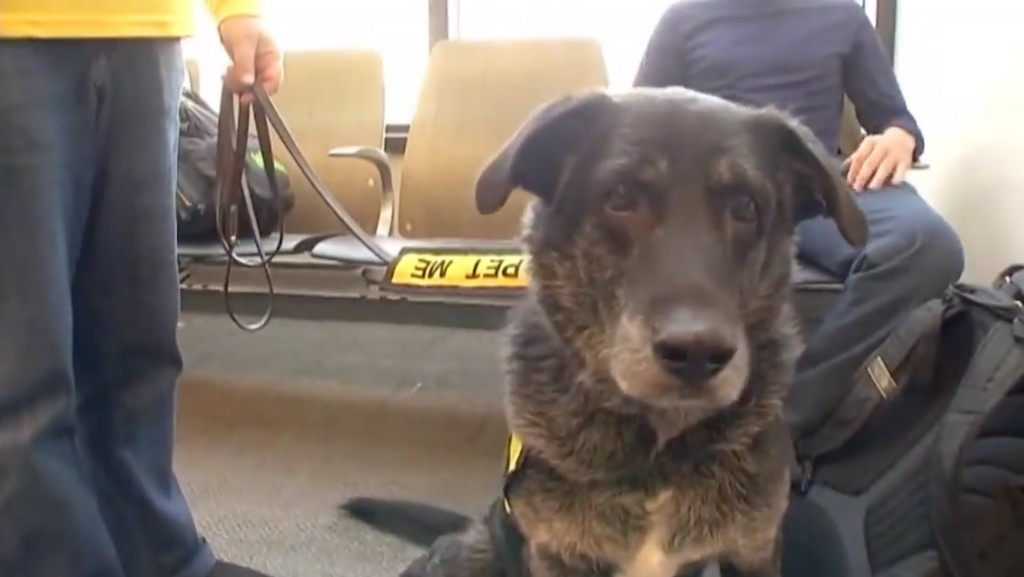 Dogs ease travelers during holiday rush