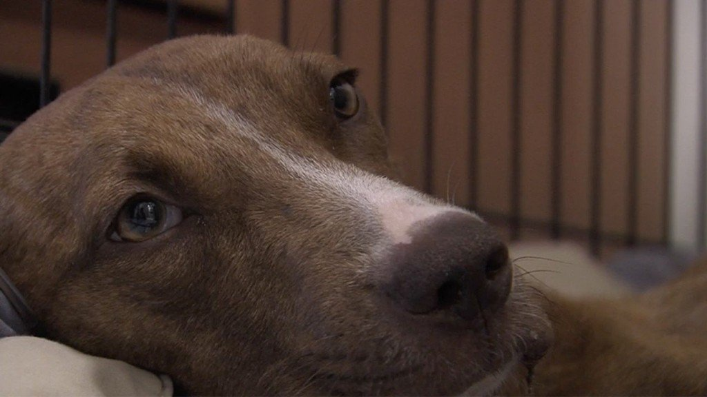 Dog rescued in Bahamas after Hurricane Dorian gets new family