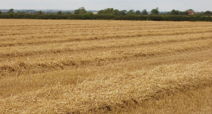 Report: US winter wheat forecast down amid drought, surplus