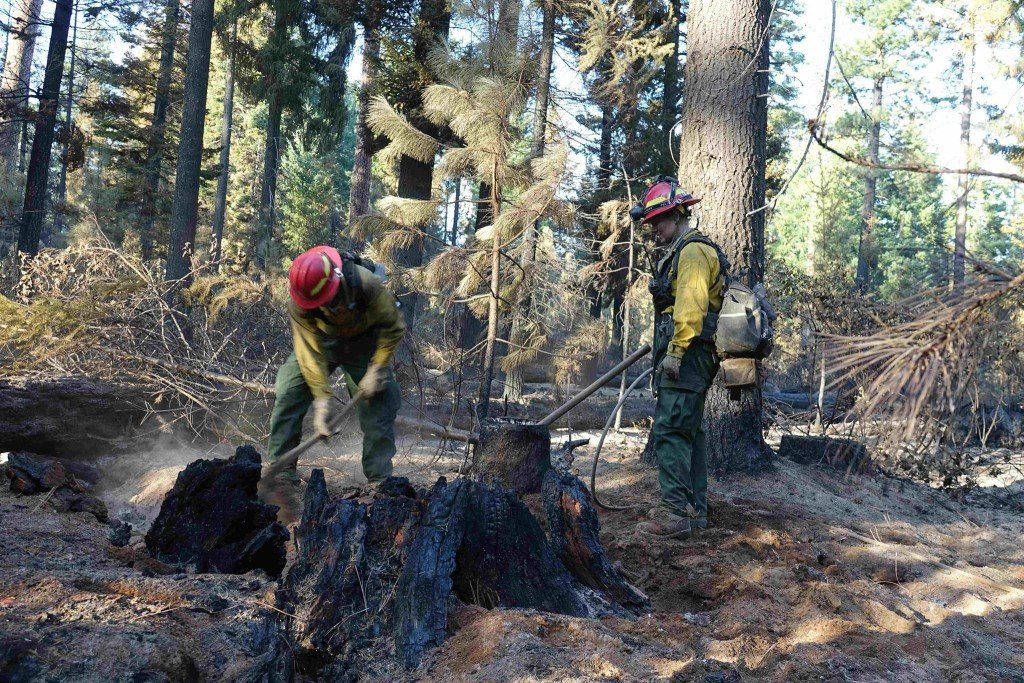 forest firefighters