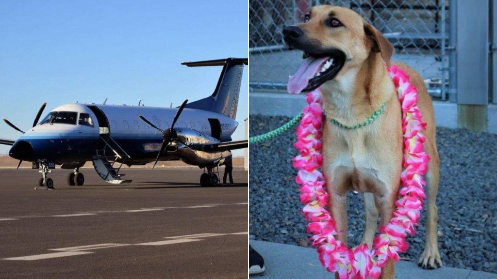 34 dogs, cats from Hawaii arrive in Walla Walla