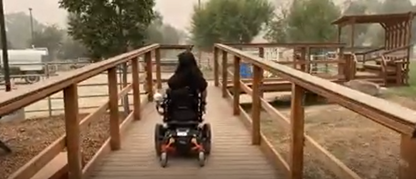 Student rides wheelchair up horse ramp.