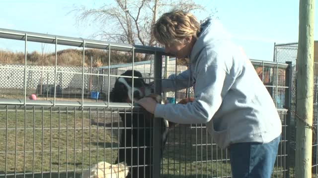 Pasco Dog Trainer Needs Help Pairing Puppies With Struggling Veterans