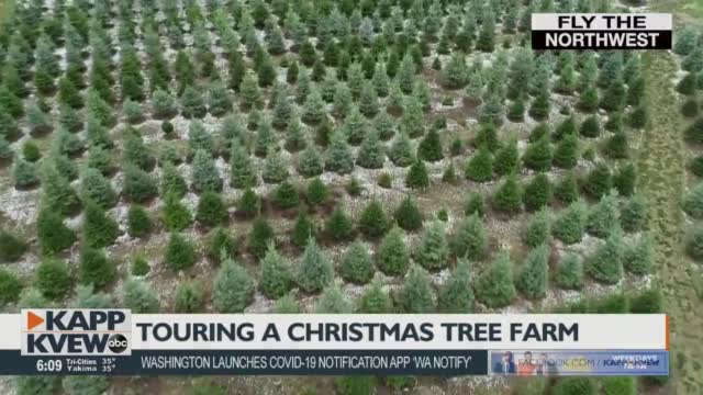 Fly The Northwest Christmas Tree Farm
