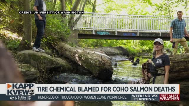 Now What? Researchers Move Forward After Discovering Chemical Compound Toxic To Coho