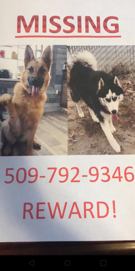 Missing dog flyer in Kennewick, WA.
