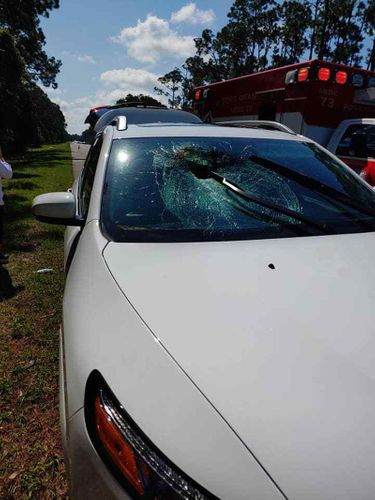 Turtle Crashes Through A Car's Windshield, Sending A Woman To The Hospital