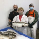 Genetically Modified Salmon Head To Us Dinner Plates