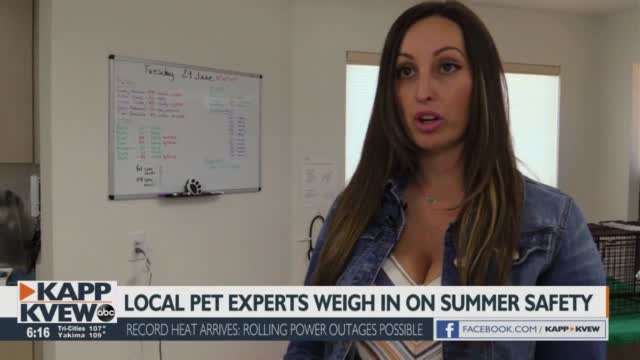 Local Pet Experts Weigh In On Safety During Heat Wave