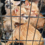 More than 80 dogs abandoned in North Idaho home