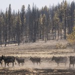 Wildfires Blasting Through West Draw States To Lend Support