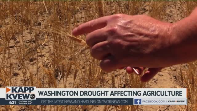 Drought Conditions In Washington Affect Farmers