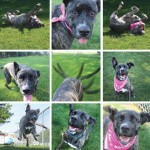 BMHS reduces adoption fees to just $5 + Meet Layla and Cosette!