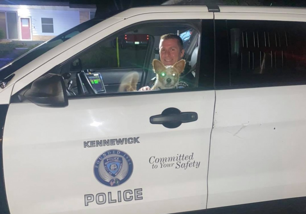Kennewick PD rescues dog
