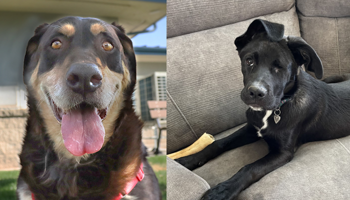 Animal Shelter Spotlight: George + Armani are ready for families